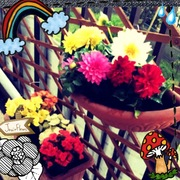 花.jpegのサムネール画像